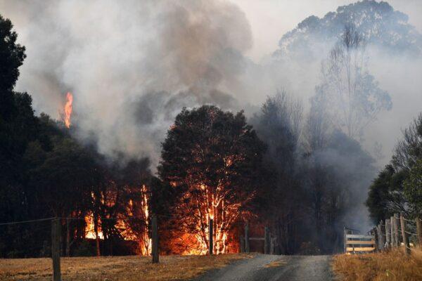 澳洲野火災情慘重 已釀26人死逾10億動物死傷