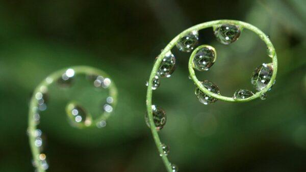 研究:植物也会发烧和出汗 还能看穿人类谎言