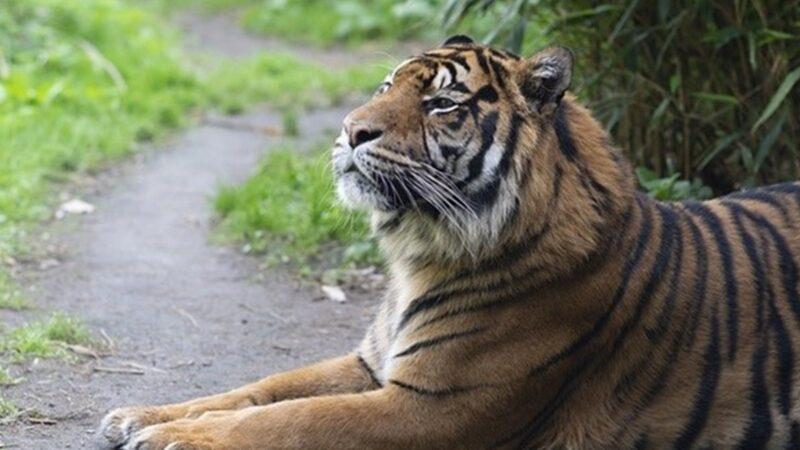 顏丹:虎吃人中禽獸 天滅喪盡天良者