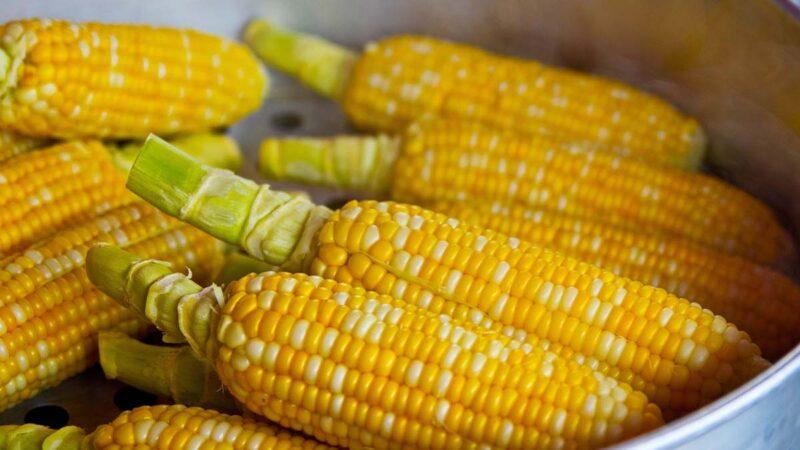 中国玉米储量锐减 2020混合汽油推广计划流产