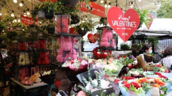 疫情下的情人節:日毀百萬枝玫瑰 花農損失慘重
