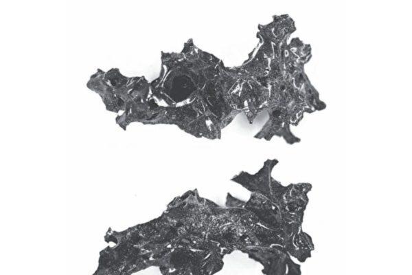 考古发现庞贝城火山喷发遇难者脑化石