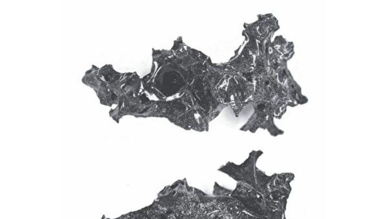 考古發現龐貝城火山噴發遇難者腦化石