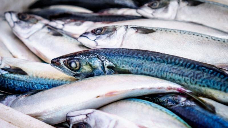 別吃這12種海鮮!為何不要吃 + 吃什麼魚好(組圖)