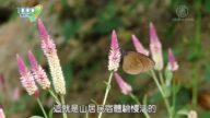 1000步的缤纷台湾: 反璞归真的旗山生态民宿