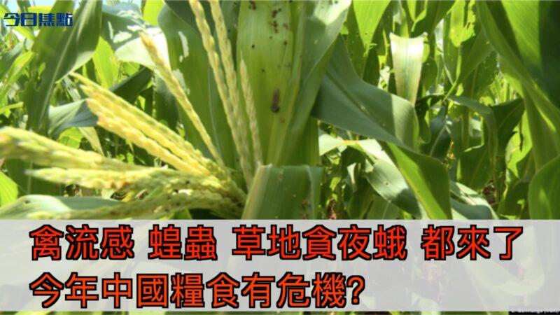 禽流感 蝗蟲 草地貪夜蛾接踵而來 今年中國糧食有危機?【今日焦點】