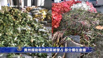 贵州援助鄂州蔬菜被侵占 部分烂在仓库