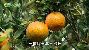 美丽心台湾