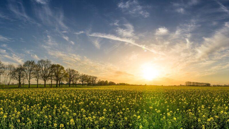 进化论被推翻 因陆生植物来源有误