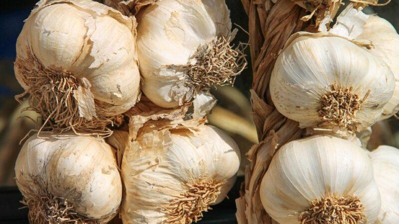 大蒜堪稱「天然抗生素」 泡醋喝增強免疫力