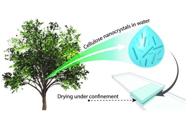 科學家發現源自於植物的超級生態膠水