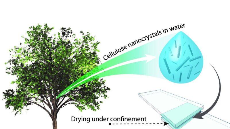 科学家发现源自于植物的超级生态胶水