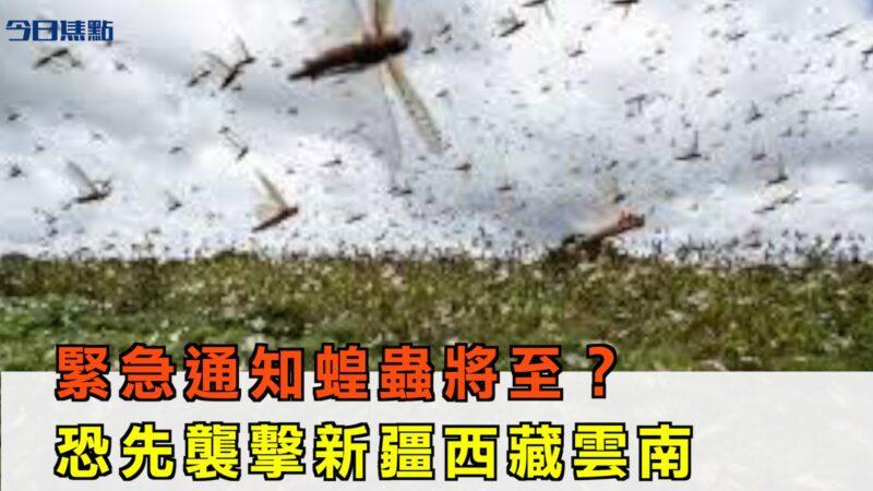 緊急通知蝗蟲將至?恐先襲新疆西藏雲南【今日焦點】
