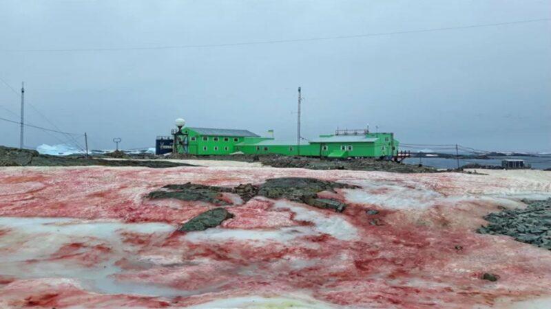 南極血紅一片  地球怎麼了?在提醒人們什麼嗎?