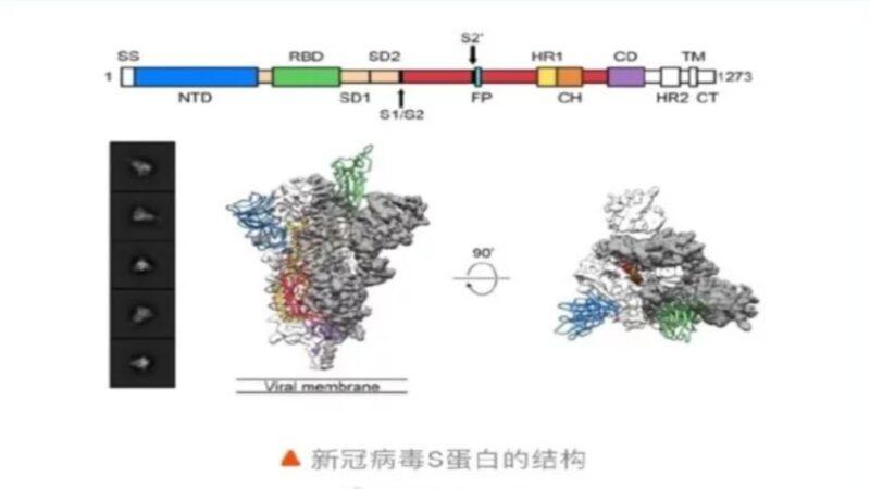 新冠病毒疑似人工插入基因片段PRRA增强了传播力