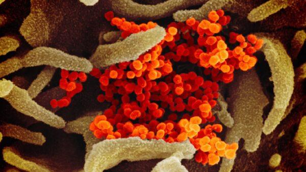 新冠病毒易變 與人體細胞結合能力超Sars千倍