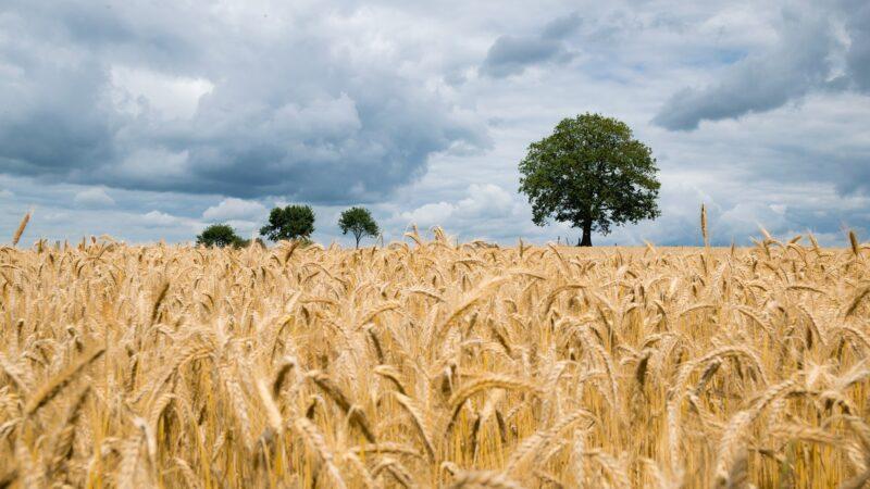 海外多國開始屯糧 國際食品價格面臨通漲威脅