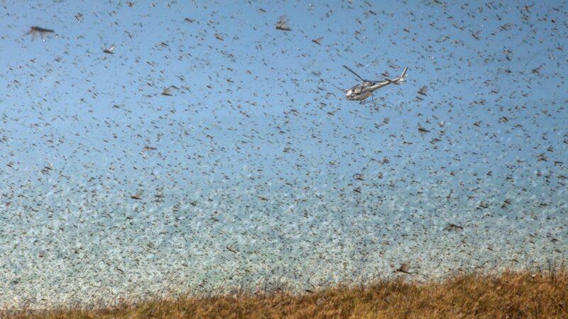 清竹:億萬黃蟲的到來與「二愁東西餓死人」