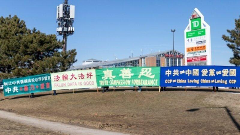 加拿大这些中国人做义工10年如一日 到底为什么?