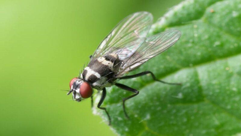 如果所有苍蝇都被消灭了 会发生什么?