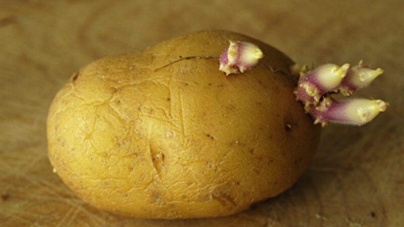 食物发芽能吃吗?有的有毒 有的更营养(组图)