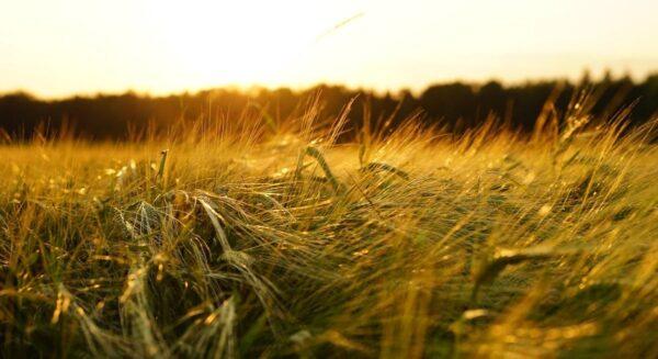 世界粮食计划署:圣经级大饥荒将至 逾2亿人危殆