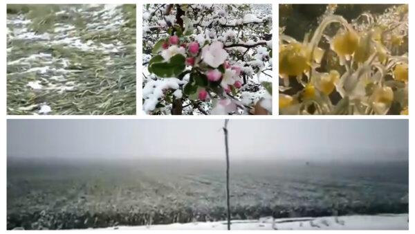 中國多地突降大雪 農田果園凍成冰凌(視頻)