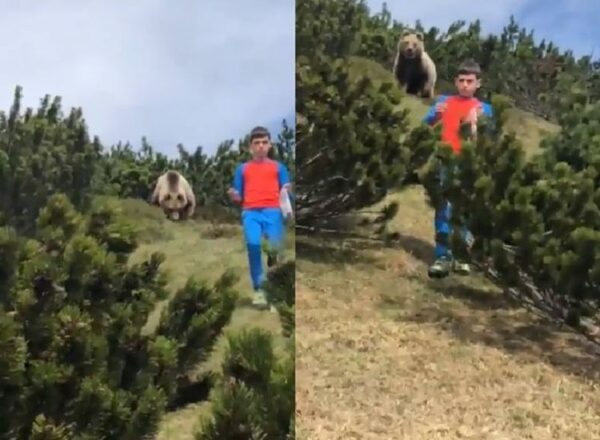 捏一把冷汗!12歲男童突遇大野熊 臨危不亂逃過一劫