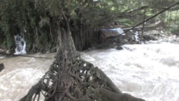 印尼神奇灵树 树根成桥助村民过河(视频)