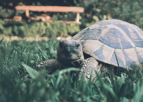 天外飛來一隻烏龜 砸穿擋風玻璃嚇壞女駕駛