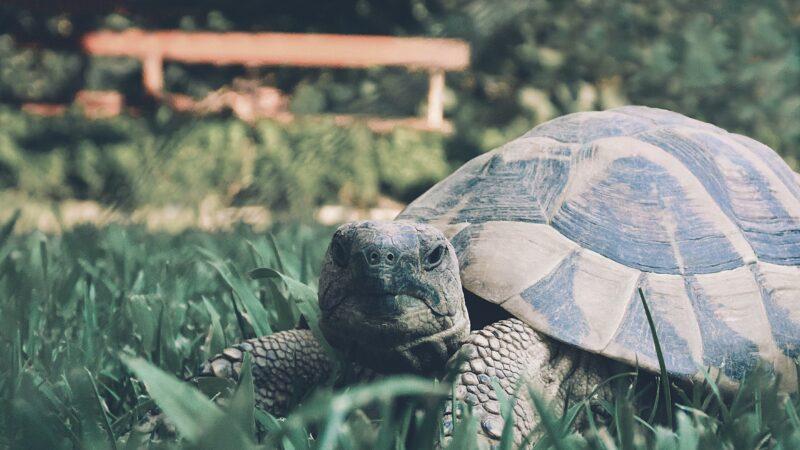 天外飞来一只乌龟 砸穿挡风玻璃吓坏女驾驶