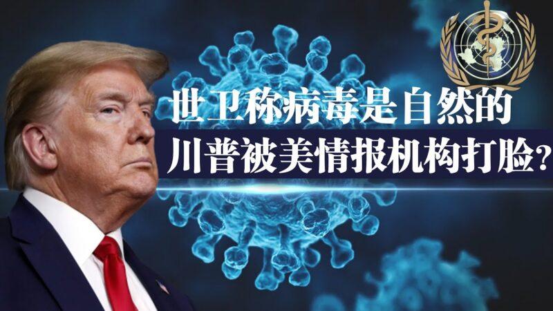 【秦鹏政经观察】世卫称病毒源于自然 川普麻烦了?
