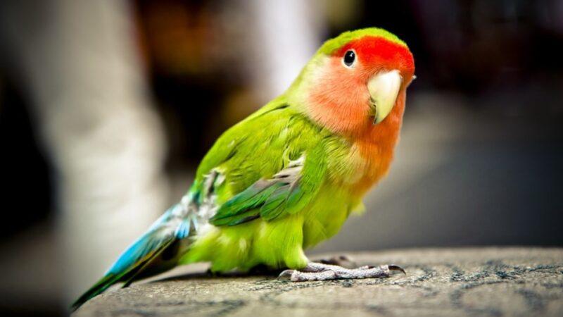 令人稱奇 人轉生為鳥的真實事件(組圖)