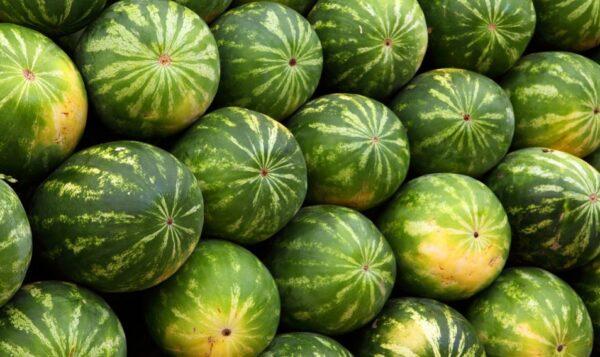 西瓜好處多 可以這樣挑選好吃的西瓜