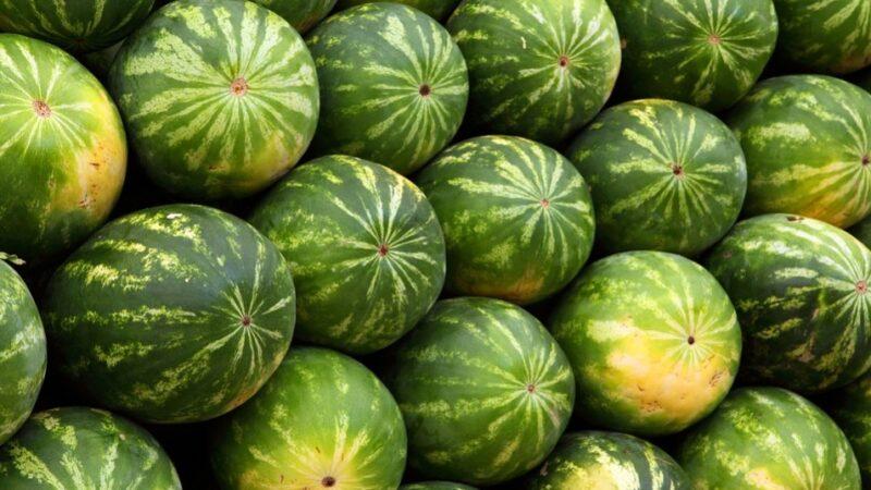西瓜好处多 可以这样挑选好吃的西瓜