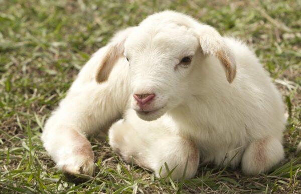 羊有跪乳之恩 鹊有反哺之义——忆慈母(组图)