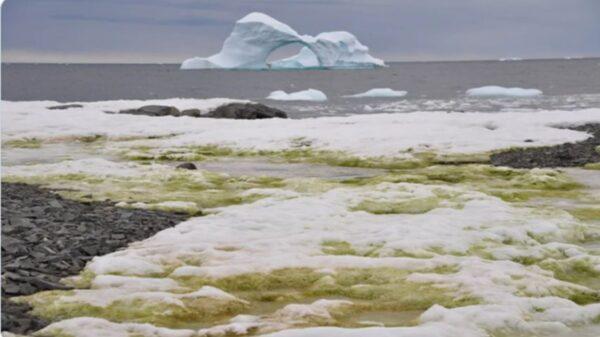 冰天雪地的南極令人不安的變綠了!