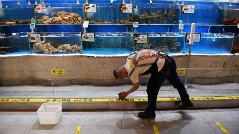 中共官方終於還三文魚清白 但海鮮商戶已經虧慘了