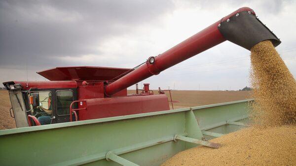 拟撕毁首阶段贸易协议?中共暂停购美农产品