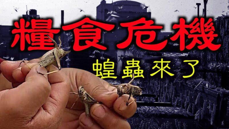 【德傳媒】蝗蟲大面積出現在吉林、黑龍江,大米收購價格翻倍,如何應對糧食危機?