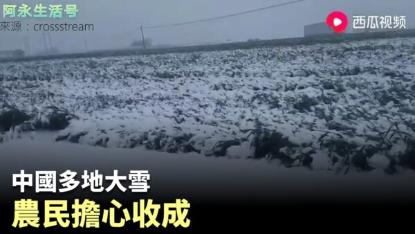 """党媒报小麦""""丰收""""亩产1700斤 评论区意外""""翻车"""""""