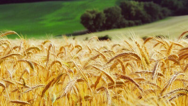 平均壽命一百歲以上的民族吃的是什麼?