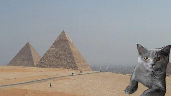 神秘金字塔的帝王谷发现活了4000年的猫?