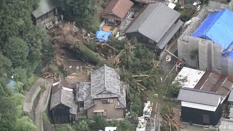 豪大雨重创 日本岐阜千年杉木连根拔起压毁民宅