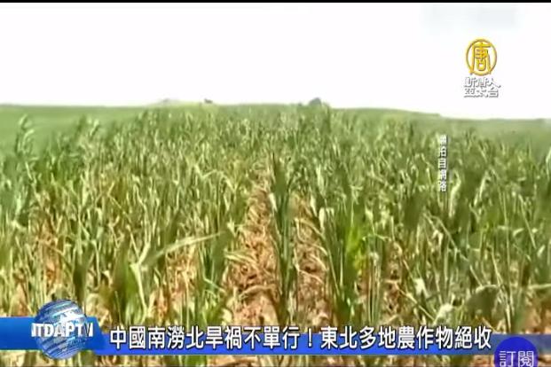 中國南澇北旱禍不單行!東北多地農作物絕收