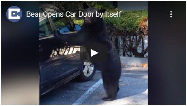 野生熊打開汽車門 車主高處急吼把牠嚇跑(視頻)