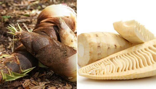竹筍減重解毒、防腸癌 醫師的4種筍食用攻略(組圖)
