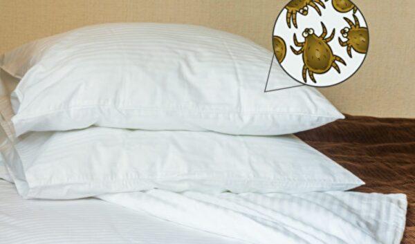 枕头是尘螨聚集地?2招教你清除尘螨防过敏