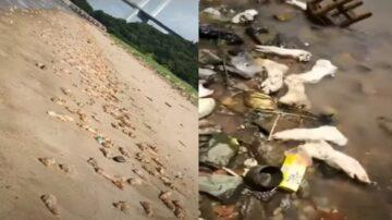 上万猪脚惊现东莞海滩 绵延约1公里