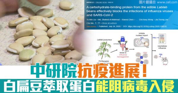 台湾中研院抗疫进展! 白扁豆萃取蛋白质能阻中共病毒入侵